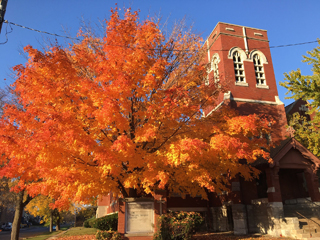 Fall in the hood: Watch a sugar maple change colors (slideshow)